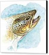Brown Trout Study Canvas Print by JQ Licensing