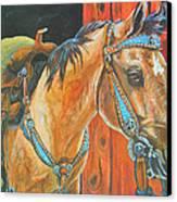 Buckskin Filly Canvas Print by Jenn Cunningham