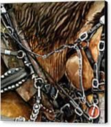 Buckskin Canvas Print by Nadi Spencer