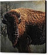 Buffalo Moon Canvas Print by Karen Slagle