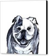 Bulldog  Canvas Print by Barbara Marcus