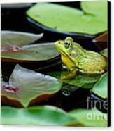 Bullfrog Canvas Print by Jim Zipp