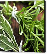 Bunches Of Fresh Herbs Canvas Print by Elena Elisseeva