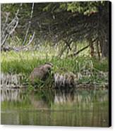 Busy Beaver Canvas Print by Charles Warren