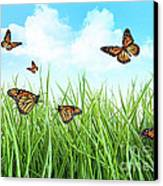 Butterflies In Tall Wet Grass  Canvas Print by Sandra Cunningham