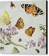 Butterflies Canvas Print by Jan Van Kessel
