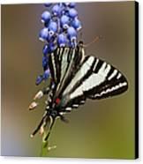 Butterfly Delight Canvas Print by Lara Ellis