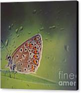 Butterfly Canvas Print by Diana Kraleva