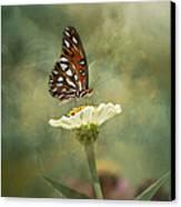 Butterfly Dreams Canvas Print by Kim Hojnacki