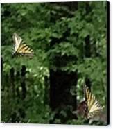 Butterfly Waltz Canvas Print by Debra     Vatalaro