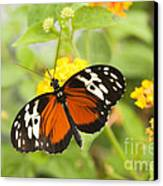 Butterfly Wings Canvas Print by Anne Gilbert