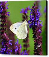 Cabbage White Butterfly Canvas Print by Christina Rollo