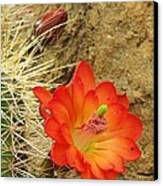 Cactus Flower Bright Canvas Print by Feva  Fotos