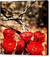 Cactus Flowers 2 Canvas Print by Julie Lueders