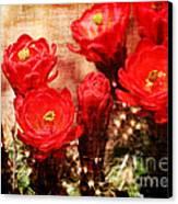 Cactus Flowers Canvas Print by Julie Lueders
