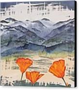 California Poppies Canvas Print by Carolyn Doe