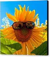 California Sunflower Canvas Print by Bill Gallagher