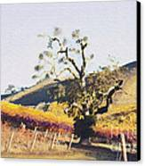 California Vineyard Series Oaks In The Vineyard Canvas Print by Artist and Photographer Laura Wrede