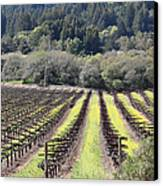 California Vineyards In Late Winter Just Before The Bloom 5d22051 Canvas Print by Wingsdomain Art and Photography