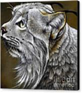 Canadian Lynx Canvas Print by Jurek Zamoyski