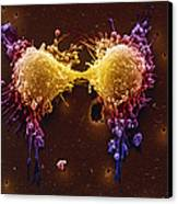 Cancer Cell Division Canvas Print by SPL and Photo Researchers