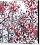 Canopy Trees Canvas Print by Priska Wettstein