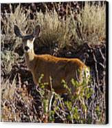 Capulon Doe Canvas Print by Charles Warren