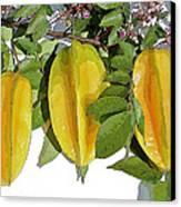 Carambolas Starfruit Three Up Canvas Print by Olivia Novak