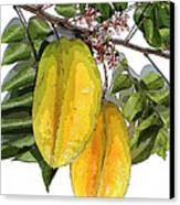 Carambolas Starfruit Two Up Canvas Print by Olivia Novak