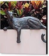 CAT Canvas Print by Rob Hans