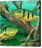 Catching Peacock Bass - Pavon Canvas Print by Terry Fox