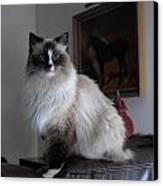 Cats 68 Canvas Print by Joyce StJames