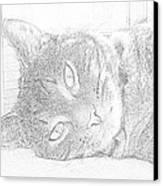 Cat's Eye Canvas Print by J D Owen