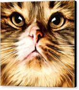 Cat's Perception Canvas Print by Lourry Legarde