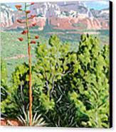 Century Plant - Sedona Canvas Print by Steve Simon