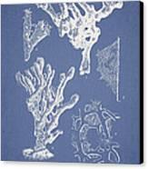 Ceratodictyon Spongiosum Zanard Canvas Print by Aged Pixel