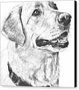 Charcoal Drawing Yellow Lab In Profile Canvas Print by Kate Sumners