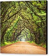 Charleston Sc Edisto Island - Botany Bay Road Canvas Print by Dave Allen