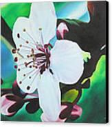 Cherry Blosom Canvas Print by Joshua Morton