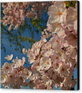 Cherry Blossoms 2013 - 035 Canvas Print by Metro DC Photography