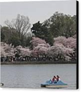 Cherry Blossoms - Washington Dc - 011315 Canvas Print by DC Photographer