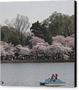 Cherry Blossoms - Washington Dc - 011315 Canvas Print by DC Photographer
