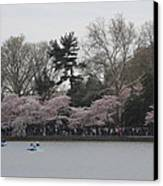 Cherry Blossoms - Washington Dc - 011317 Canvas Print by DC Photographer
