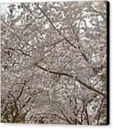 Cherry Blossoms - Washington Dc - 011363 Canvas Print by DC Photographer