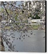 Cherry Blossoms With Jefferson Memorial - Washington Dc - 011336 Canvas Print by DC Photographer