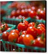 Cherry Tomatoes Canvas Print by Caitlyn  Grasso