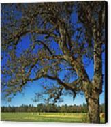 Chickamauga Battlefield Canvas Print by Mountain Dreams