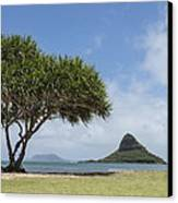 Chinamans Hat With Tree - Oahu Hawaii Canvas Print by Brian Harig