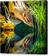 Chipmunk Reflection Canvas Print by Bob Orsillo