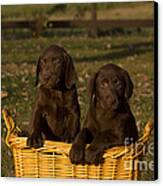Chocolate Labrador Retriever Pups Canvas Print by Linda Freshwaters Arndt